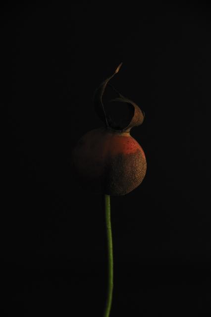 Silence, photo by Marco Bertolini