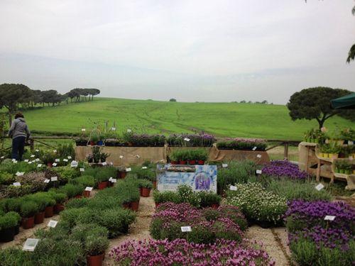 Floracult at I Casali del Pino