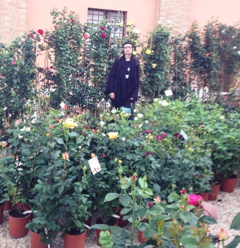 Myriam B. and the Barni roses