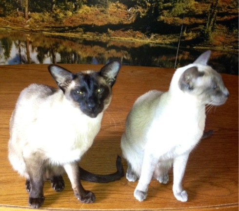 Two of the smashing Vivetta's cats...