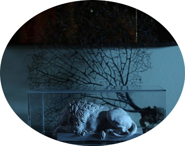 photo by Mustafa Sabbagh, Canovaean plaster sculpture representing a lion, a branch of natural black coral