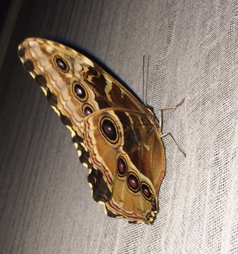 A butterfly featuring in Patma by Sacha Turchi, photo by N