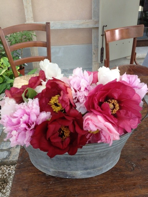 Peonies( without alchool.  Peonies with alchook are another story I tell you during the forthcoming days) at Floracult, photo by N