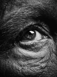 Sandro Miller, Bill Brandt / Eyes (1960-1964) (C), 2014, photo courtesy of Catherine Edelman Gallery